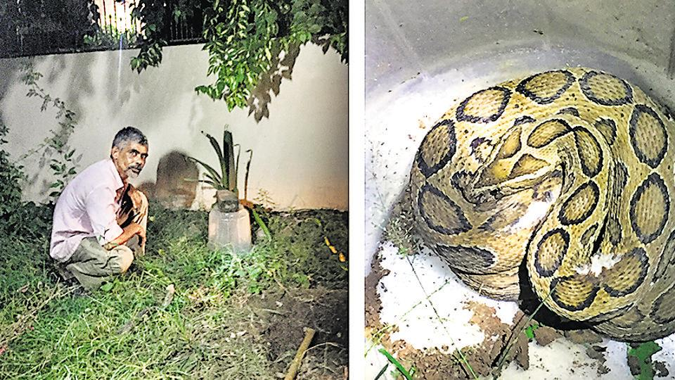 Salim Khan in a Panchkula bungalow garden; and (right) a captured viper.