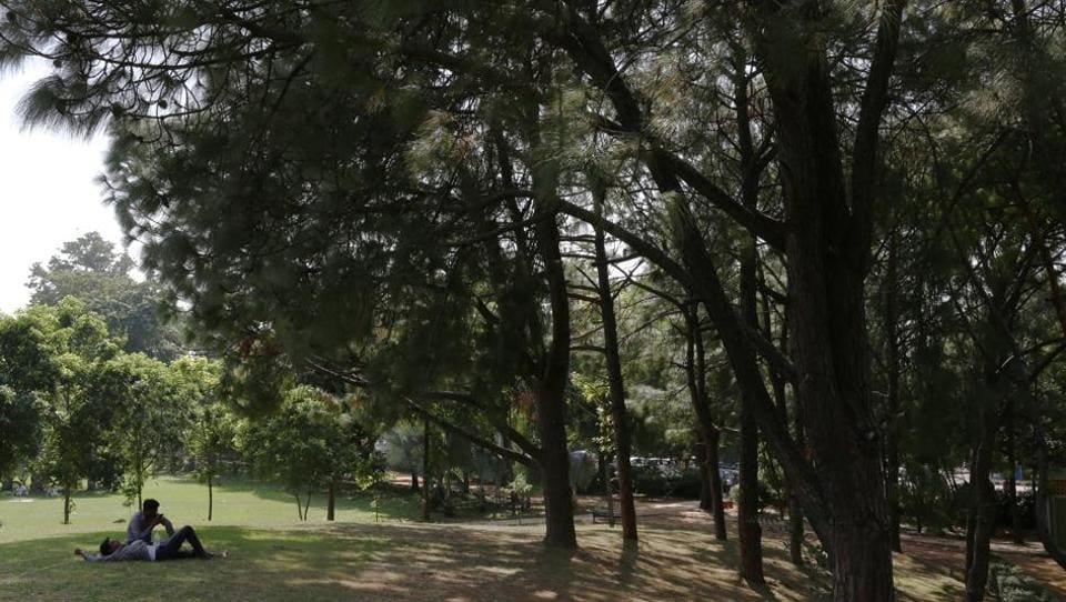 A hillock on the northwest edge of Nehru Park has a beautiful cluster of chir pines.