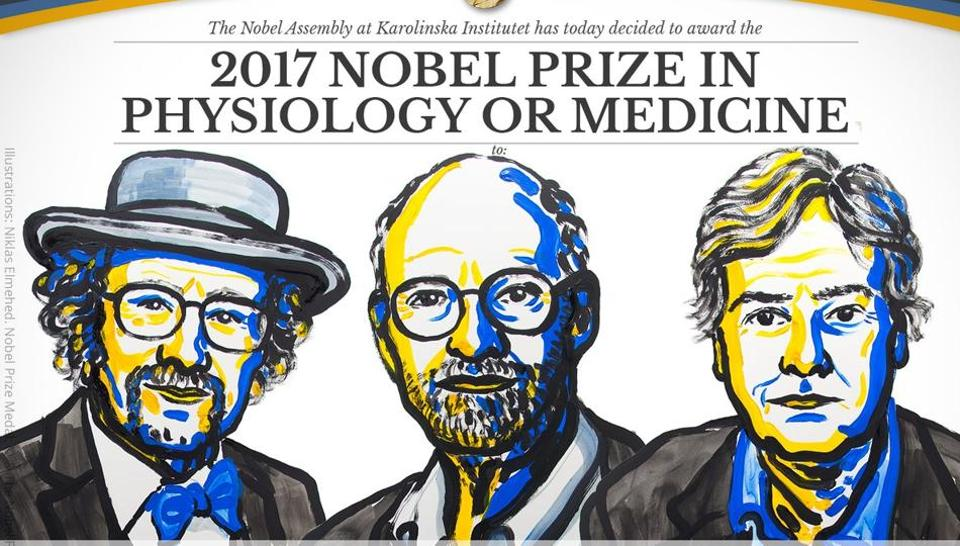 Scientists Jeffrey Hall, Michael Rosbash and Michael Young