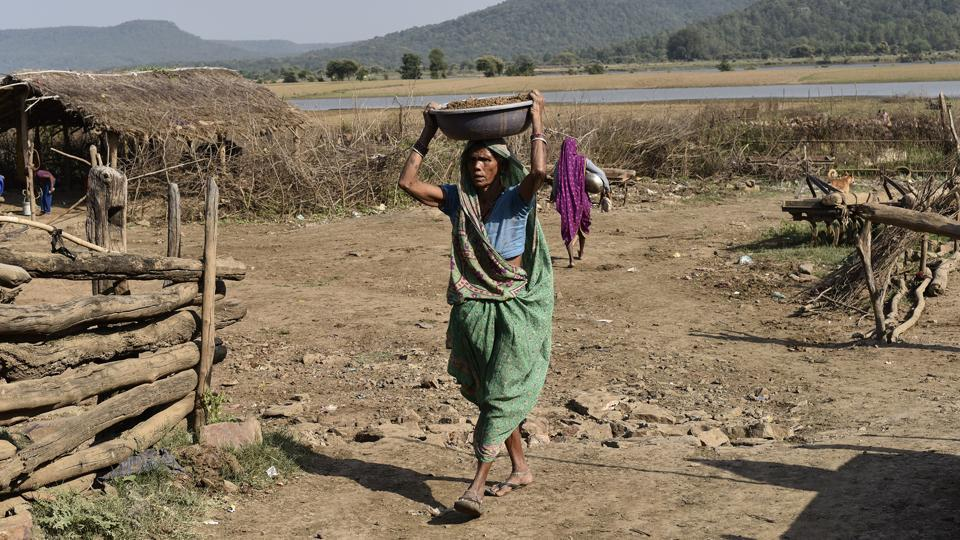 Villagers who live on the side of the Panna forest reserve fear conditions of famine, since illegal sand mining has already changed the course of the river Ken.  (Vipin Kumar / HT PHOTO)