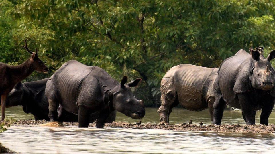 Kaziranaga National Park,Assam flood,One-horned rhinos