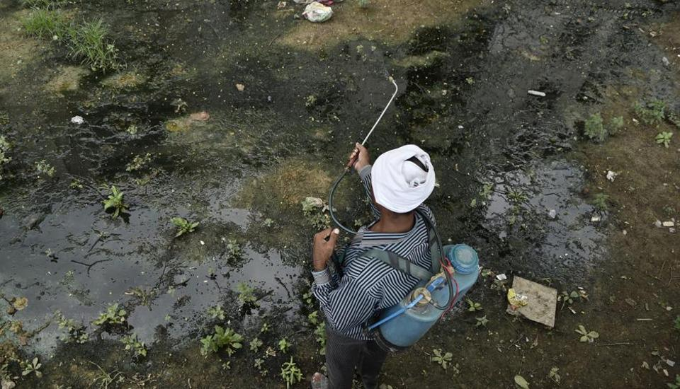 A municipal worker sprays insecticide in Okhla's Shaheen Bagh area.