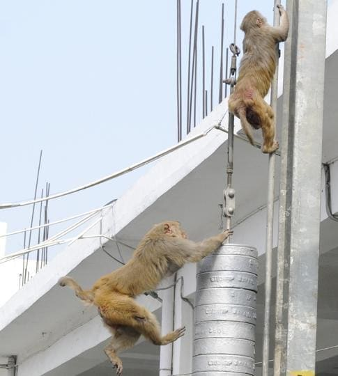 The recent spate of attacks by rampaging monkeys in the city is a cause of worry for the residents, so much so that the forest department's Indira Nagar control room gets calls every day.