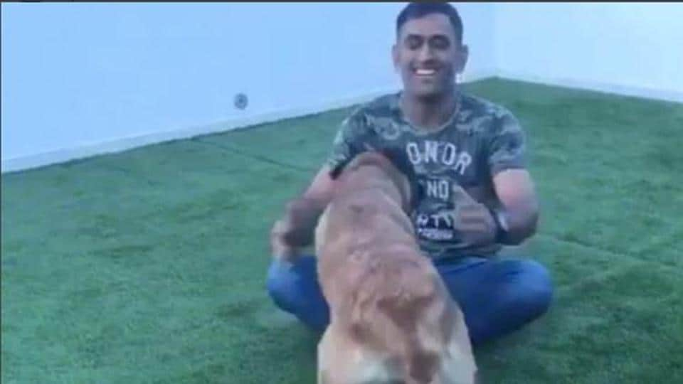 A dog lover, MS Dhoni is a former Indian cricket team captain. He is currently in his hometown Ranchi for the first India vs Australia T20 on October 7.