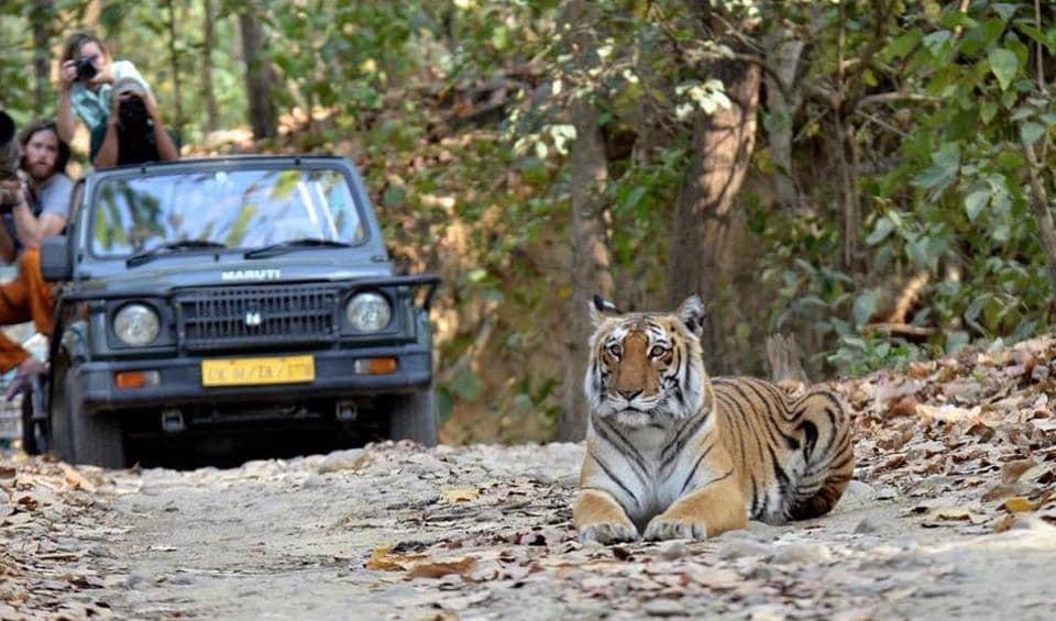 Wildlife,eco tourism,ecotourism