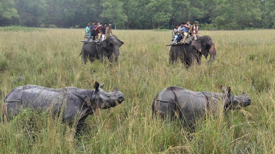 Tourists riding  on elephants look at a pair of Indian one-horn rhinos at the Pobitora wildlife sanctuary, some 55 kilometres east of Guwahati. After a devastating wave of floods, Pobitora wildlife sanctuary and Kaziranga National Park have been reopened for tourist season. (Biju Boro / AFP)