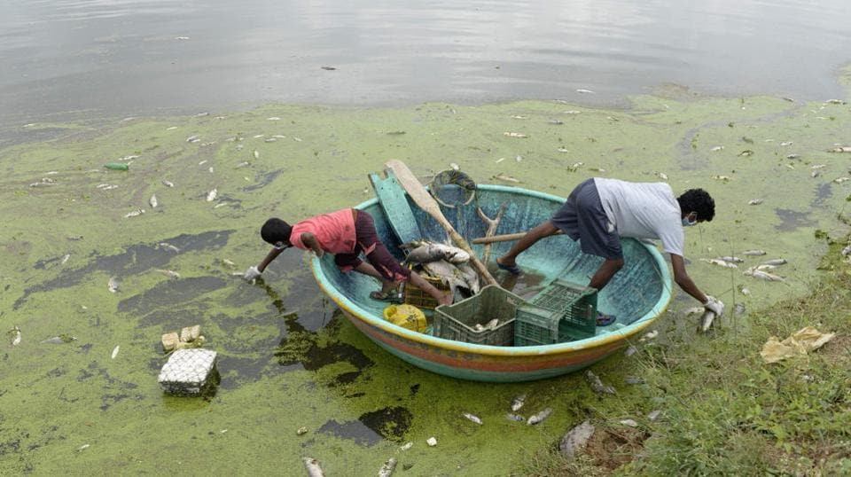 Indian fishermen collect dead fish in Gandi Lake in Sangareddy district near Hyderabad. Authorities said around 70 to 80 percent of the fish in Gandi Lake had died after chemical waste was released from a nearby industrial estate following heavy rains. (Noah SEELAM / AFP)