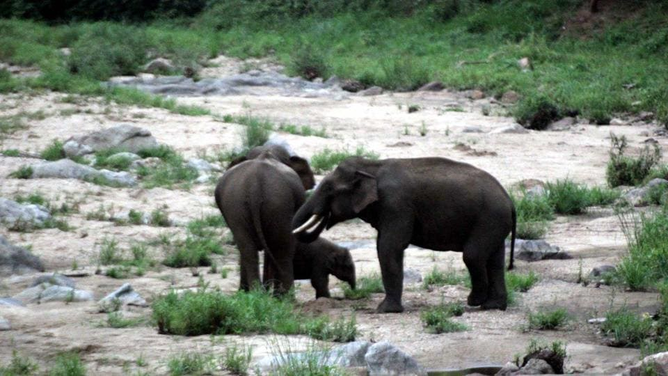 The missing tusker was part of a three-member group of elephants that has been regularly venturing into the villages for nearly 15-20 days.