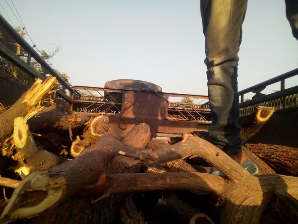 The trees chopped along the Gurgaon-Faridabad highway.
