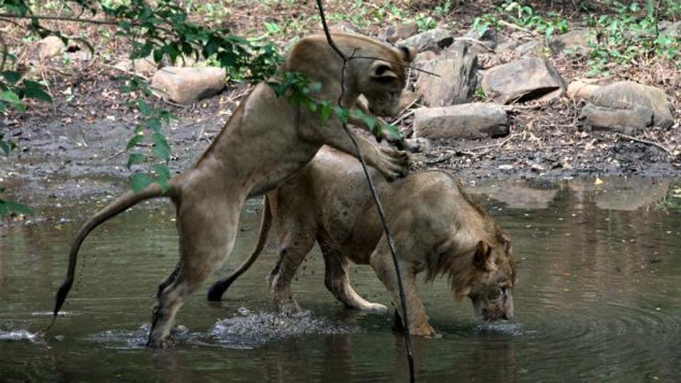 Nahargarh Biological Park,Rajasthan,Vasundhara Raje