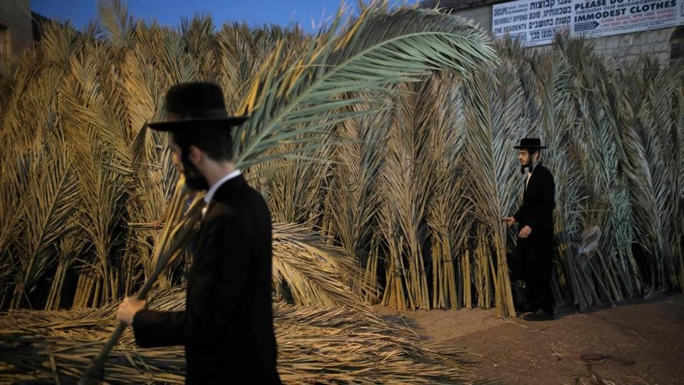An Ultra-Orthodox Jewish man carries palm branches for the roof of his Sukkah, a temporary hut constructed for use during the Jewish festival of Sukkot or the Feast of the Tabernacles in the neighbourhood of Mea Shearim, Jerusalem. Sukkot, a week-long holiday feast which began on October 4 is meant to commemorate the exodus of Jews from Egypt some 3200 years ago. (Menahem Kahana / AFP)