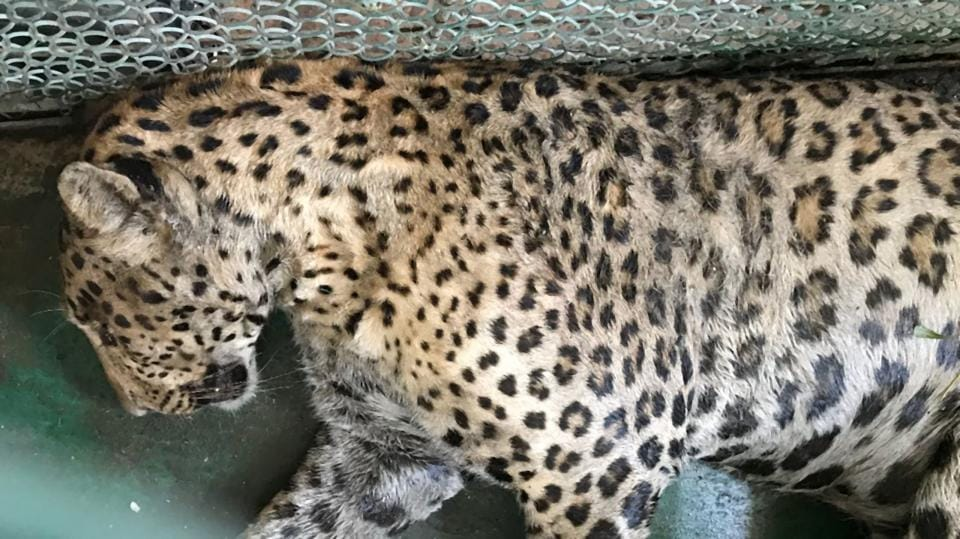 The move to open a Whatsapp helpline assumes significance at a time when residents and wildlife experts have flagged concerns over poaching and man-animal conflict