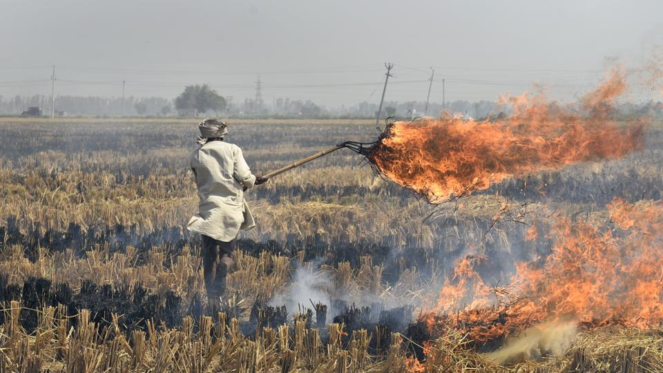 A farmer in Karnal sets crop-residue on fire, leaving behind black ash. Stubble burning has already started on Delhi's borders and NASA images revealed that red dots — denoting incidents of fire — have started appearing almost everywhere in Haryana and Punjab. (Burhaan Kinu / HT PHOTO)