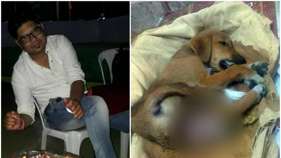 30-year-old Abhishek Ingle, from Nagpur, reportedly kicked a two-month-old puppy till its intestines came out  (Seetha Anilkumar\Facebook)