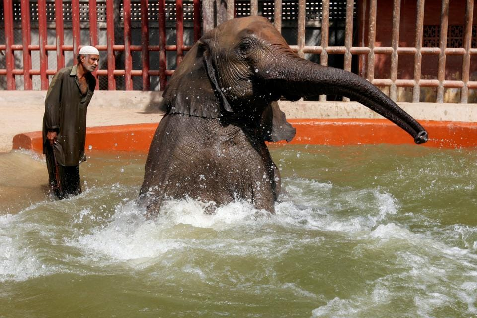 An elephant takes a bath in the Karachi zoological garden on what was a hot and humid day on October 10, 2017.