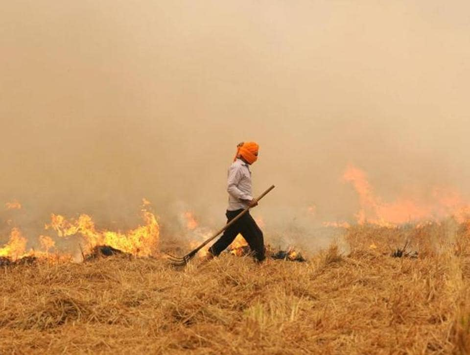 Paddy stubble is burnt by farmers across Punjab every October.