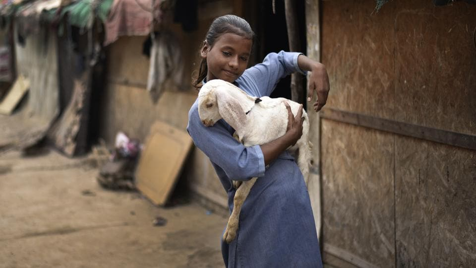 Ismat Ara, a student of class VII, carries her pet goat around at the Shaheen Bagh camp. (Burhaan Kinu / HT PHOTO)