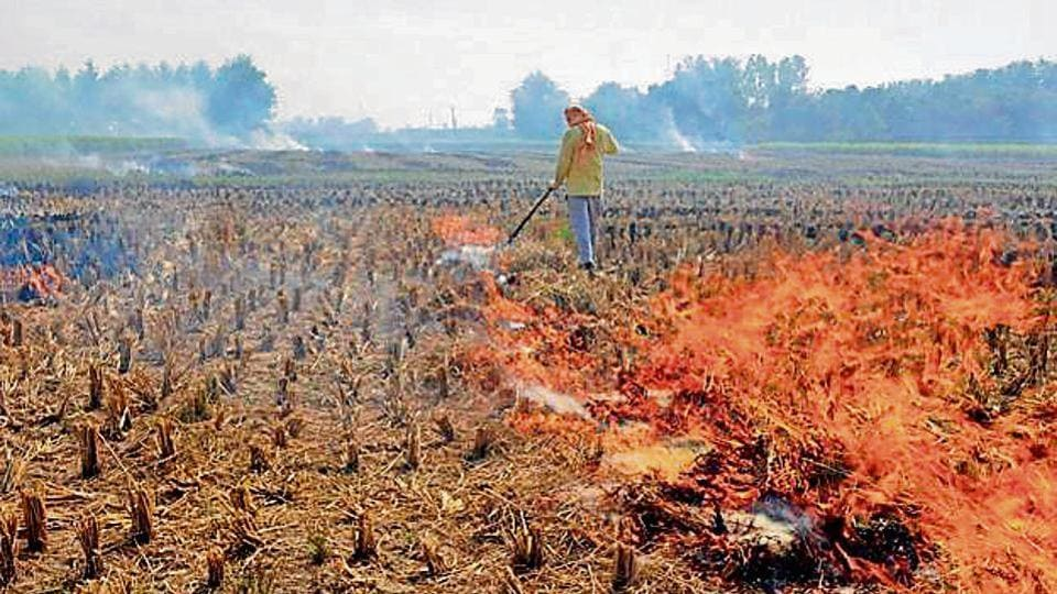 Last year, a total of 2,414 cases of stubble burning were reported in Punjab.