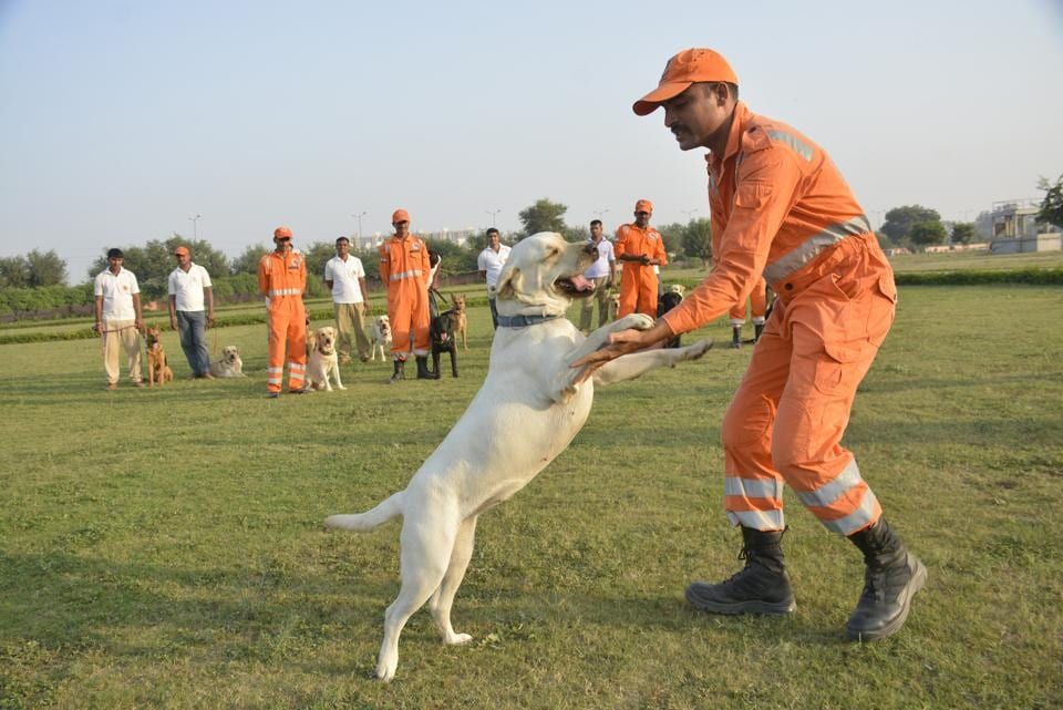 The canines are trained for nearly 90 weeks before the NDRF sends them on relief and rescue operations.