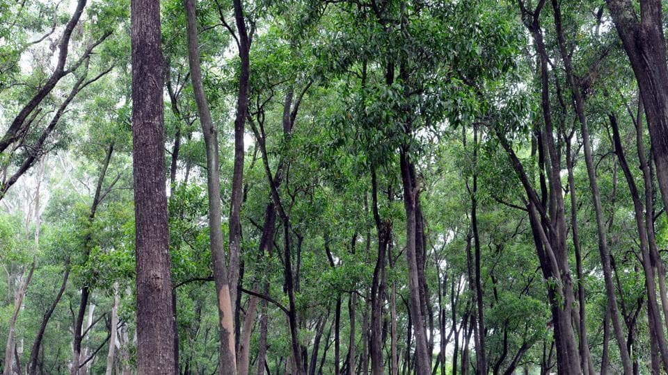 A conservation movement started by local NGOs and villagers in Jhabua district of Madhya Pradesh four years ago  helps revive village forests.