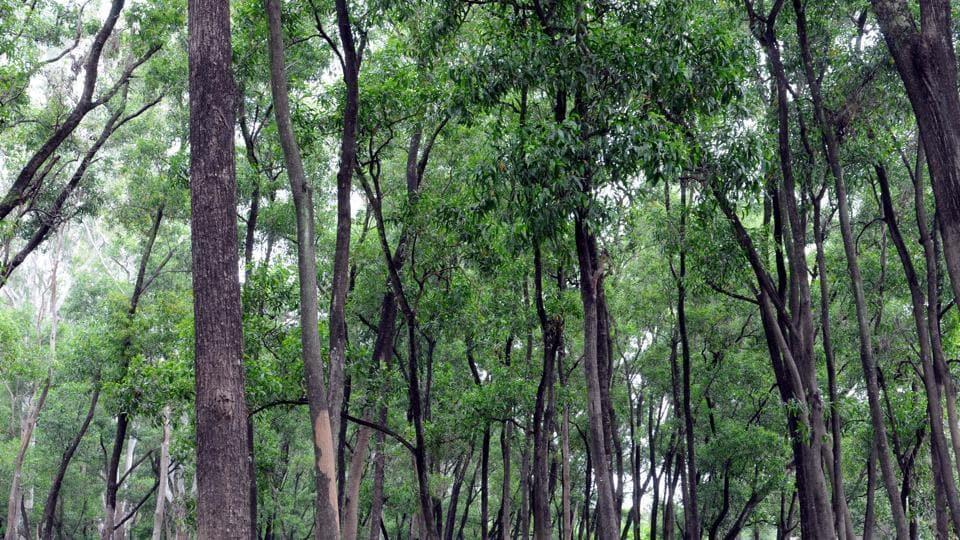 Afforestation drive,Madhya Pradesh,Jhabua