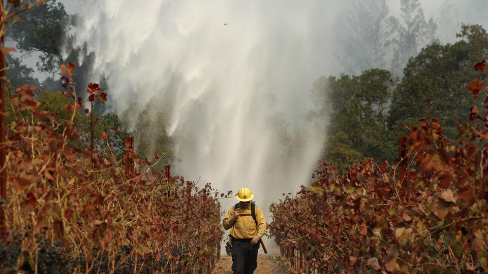 Firefighter Chris Oliver walks between grape vines as a helicopter drops water over a wildfire burning near a winery Saturday, Oct. 14, 2017, in Santa Rosa, California. Fire crews made progress this week in their efforts to contain the massive wildfires in California wine country, but officials say strong winds are putting their work to the test.  (AP Photo)