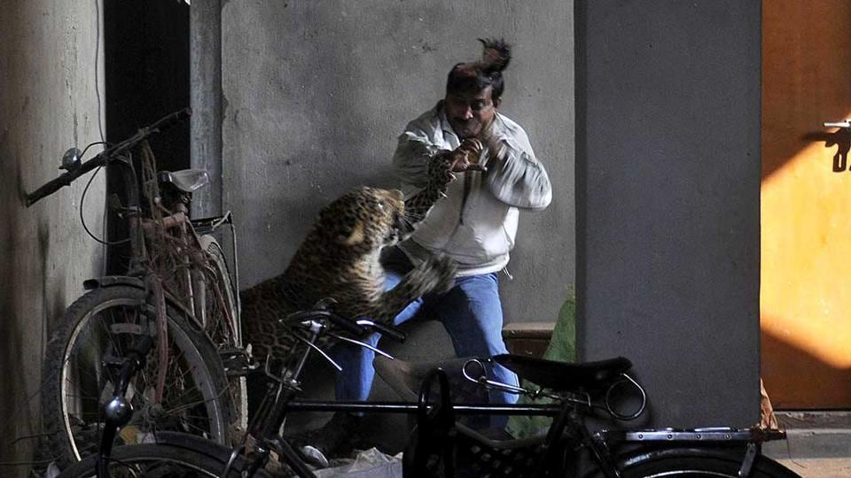 A leopard attacks and wounds a man in Silphukhuri area in Guwahati.