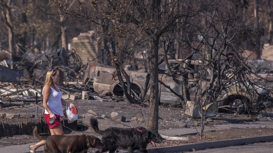 A woman walks dogs through the fire-devastated Coffey Park neighborhood on October 14, 2017 in Santa Rosa, California.  (AFP Photo)