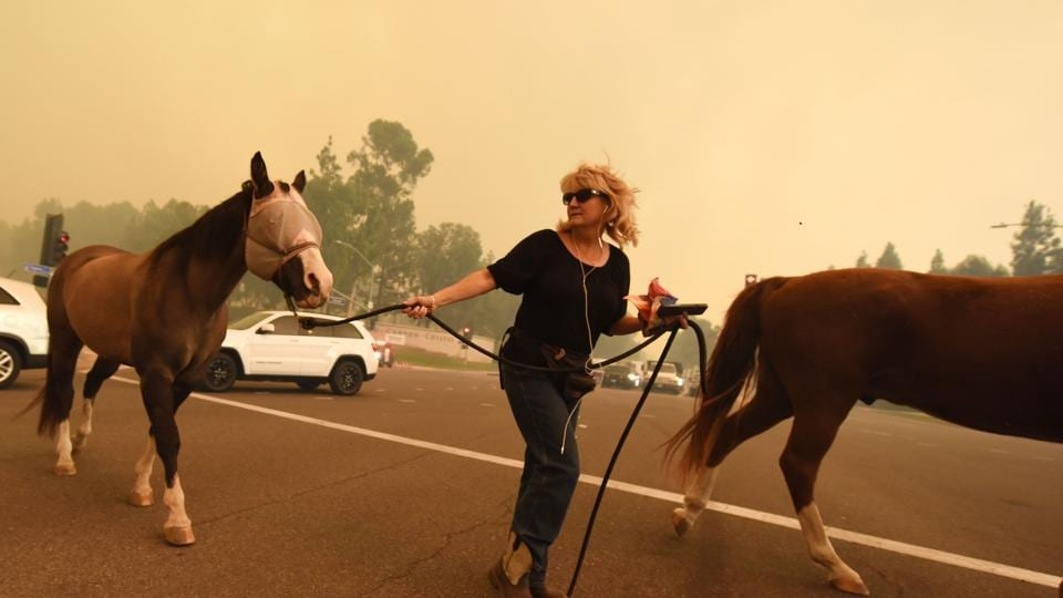 A woman evacuates horses as strong Santa Ana winds blow fire and smoke from the Canyon 2 Fire toward them in Orange, California. (AFP Photo)