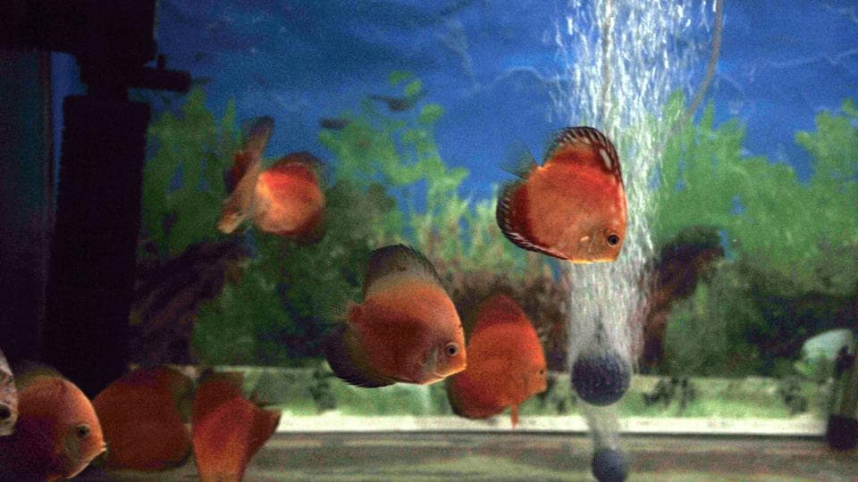 Fishes in one of the displays flock together. (HT PHOTO)