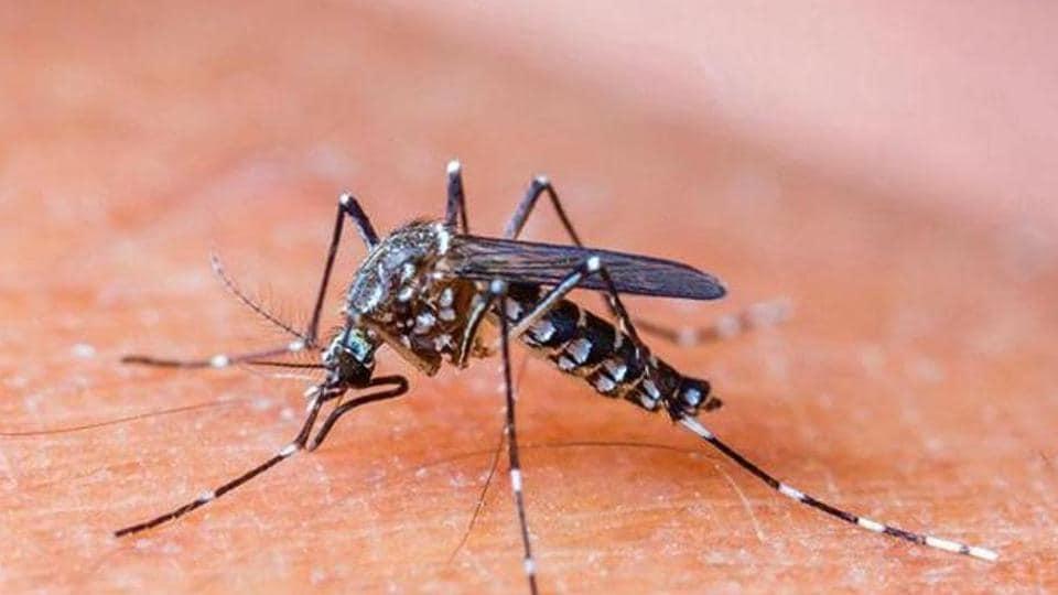 Mumbai,dengue,malaria