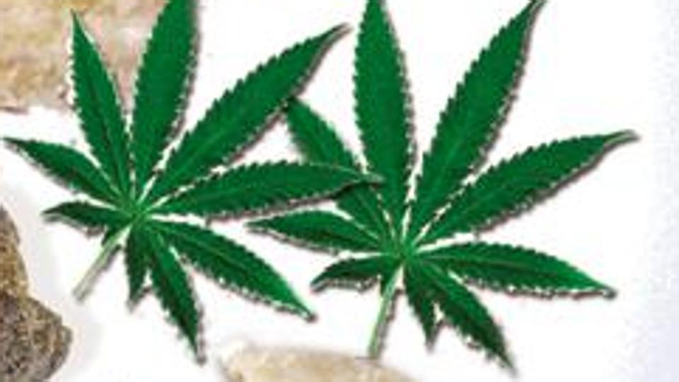 charas,drug smuggling,narcotics