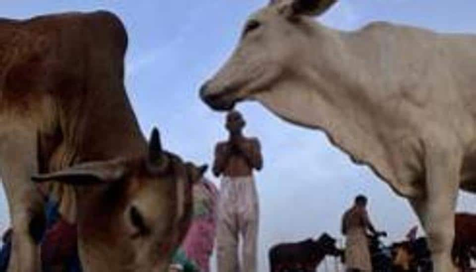 Cow is an emotive issue in BJP-ruled states, with vigilantes targeting those engaged in their trade and slaughter.