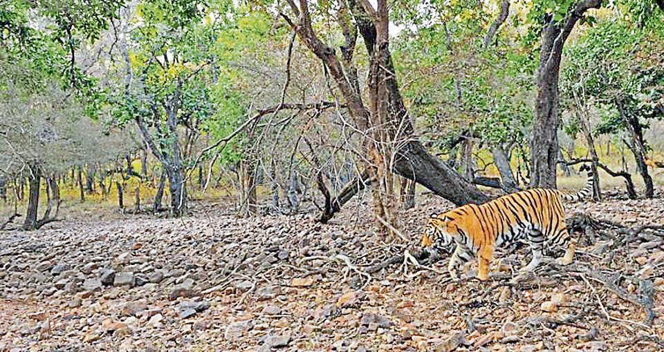 The forest department will develop Van Vihar and Ramsagar sanctuary in Dholpur district to promote ecotourism on the lines of Ranthambore tiger reserve.