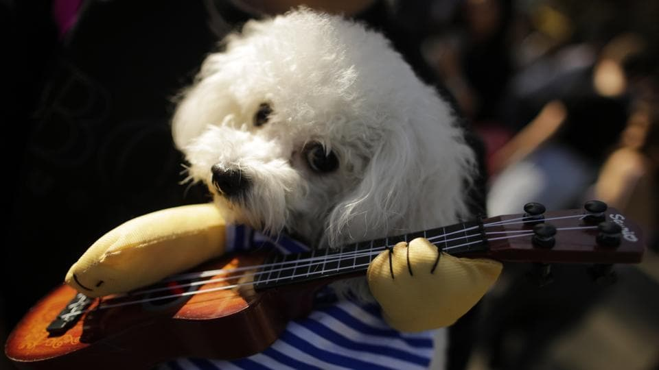 Puppy dog eyes, a striped sailor t-shirt and a ukulele --hipster much? (Eduardo Munoz Alvarez / Getty Images / AFP)