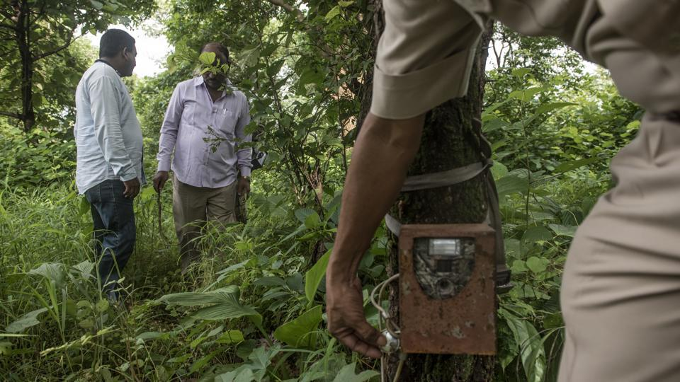 Forest officials set a camera trap to trace leopard movement. A 2015 SGNP survey says there are 35 leopards in and around the national park and Aarey is among their dominant habitats. Earlier this month, the forest department trapped one at Film City, which they claim was responsible for all attacks since March this year. The tribals however, disagree saying that there are at least three to four leopards that live close to each hamlet. (Satish Bate / HT Photo)