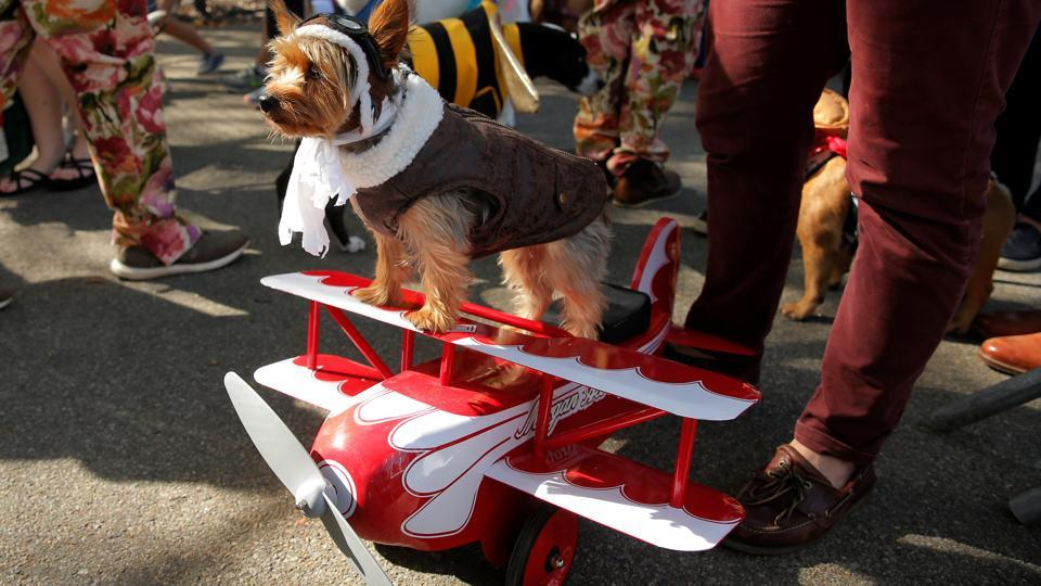 All clear on the runway for this high-flying pup at the annual Halloween dog parade at Manhattan's Tompkins Square Park. (Lucas Jackson / REUTERS)