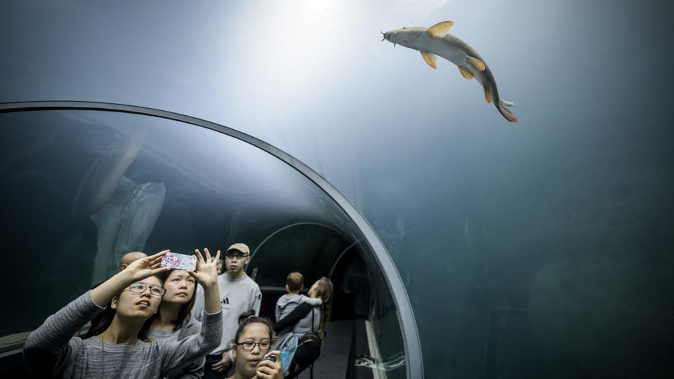 Visitors admire a fish in a glass tunnel on the opening day of Aquatis, the largest fresh water aquarium-vivarium in Lausanne, Switzerland. Aquatis opened its doors to the public, offering visitors a chance to discover little-known species of fish, reptiles and amphibians from across five continents. (Fabrice Coffrini / AFP)