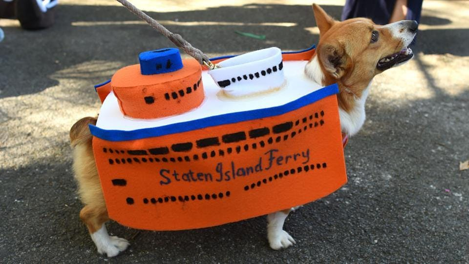 All aboard the Staten Island Ferry! Let man's best friend take you on a joyride through the New York Harbour. (Timothy A. Clary / AFP)
