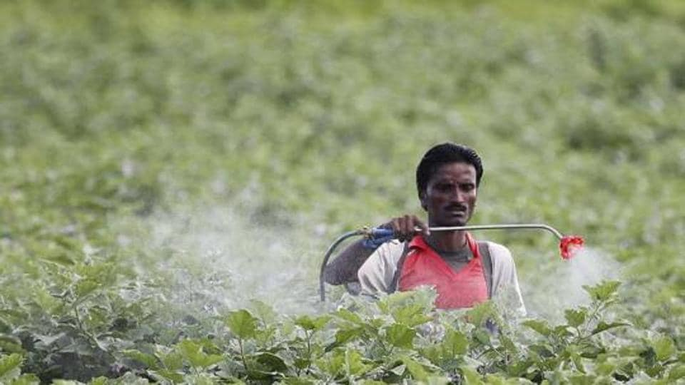 A farmer sprays pesticide in a cotton field. Gujarat produces three varieties of cotton whose MSPs range from Rs 804 to Rs 864 per 20 kg.