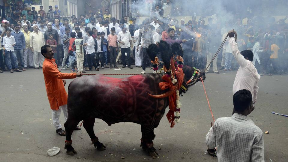 A community of milkman tries to tame a decorated buffalo at Ganesh peth during 'Sagar', an annual traditional celebration of the Gawli community held on the occasion of Bhai Bheej, on October 21. (Ravindra Joshi/HT PHOTO)