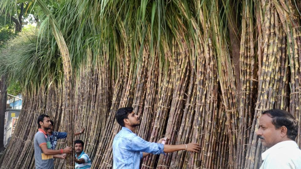 In Kolkata people buy sugarcane from a market ahead of Chhath Puja on Monday. Devotees during this period strive towards purity and live frugally. (PTI)