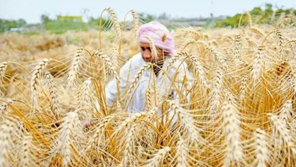 Punjab farmers,demonetisation,farmer suicides