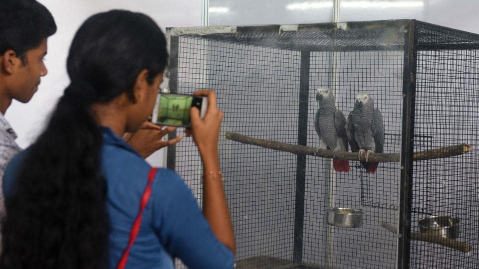 Visitors take photos on mobile of African Grey Parrot at 'World of Wings', an exhibition of unique birds at Ganesh Kala Krida hall in Pune. (Pratham Gokhale/HT Photo)