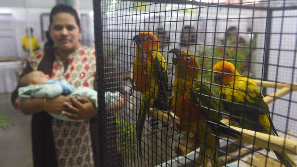 A woman with a baby in her hand watches Sun Conure, a medium-sized brightly coloured parrot  predominantly golden-yellow plumage and orange-flushed underparts and face, native to northeastern South America seen at 'World of Wings', an exhibition of unique birds at Ganesh Kala Krida hall in Pune. (Pratham Gokhale/HT Photo)