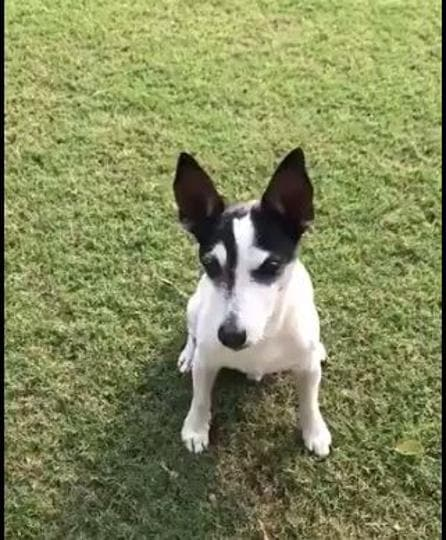 Rahul Gandhi tweeted a video of his terrier, Pidi, attributing his recent his recent activity on social media to his pet.