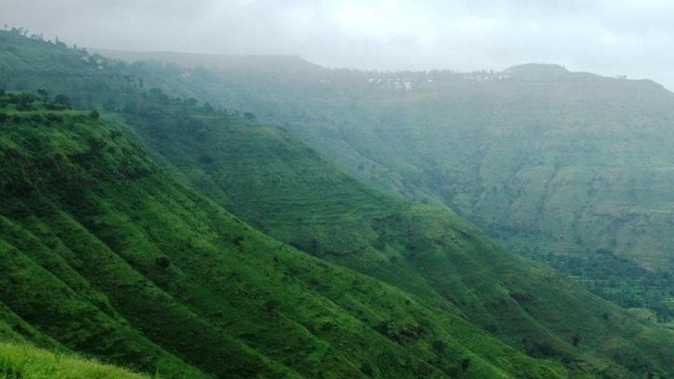 Mumbai news,Maharashtra,Forest produce