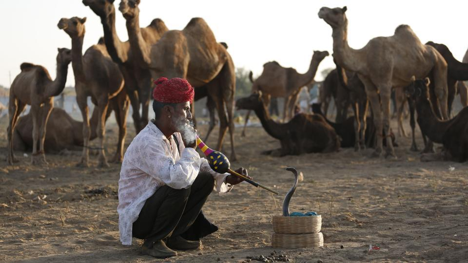 A snake charmer smokes tobacco as he sits next to camels at the annual cattle fair in Pushkar. Pushkar fair, over the years has become a significant tourist attraction for both national and international travellers.  (Deepak Sharma / AP)
