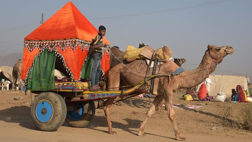 A boy rides a decorated cart pulled by a camel at the Camel Fair in Pushkar. (Dominique Faget / AFP)