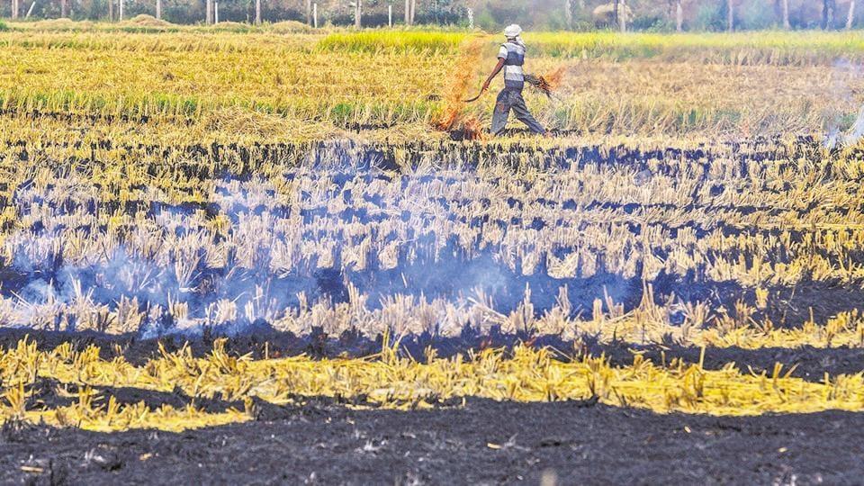 Stubble burning,Punjab,National Green Tribunal